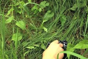 Survival Lab: Harvest Dew