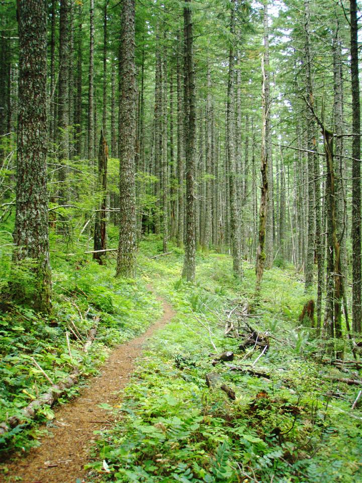 Play List Trail Running