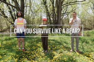 Human vs. Bear: Can Our Editors Survive?